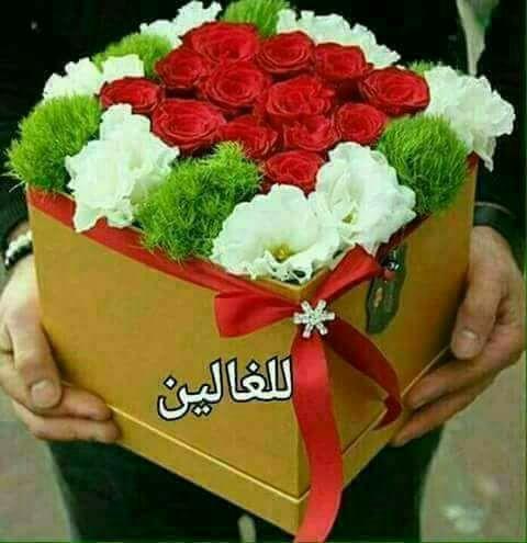 سهير سعدان On Twitter مساء الورد مساء الحب مساء الجمال لعيونكم