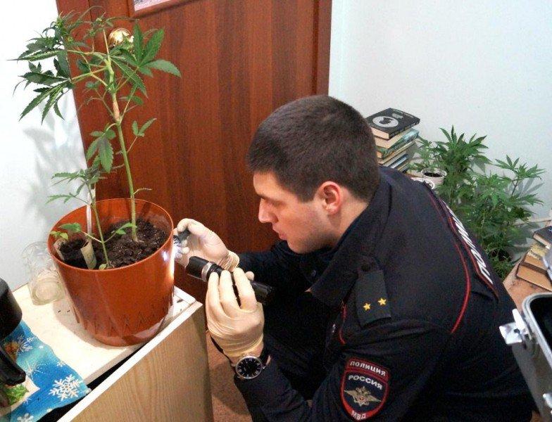 Какое наказание за выращивание марихуаны в россии видео когда созревает марихуана