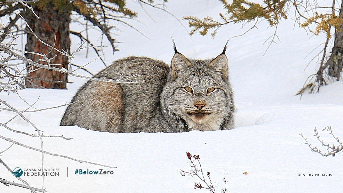 Canadian Wildlife Federation on Twitter: