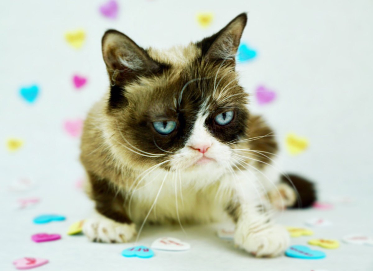 Grumpy Cat (@RealGrumpyCat) on Twitter photo 2018-02-07 20:45:10