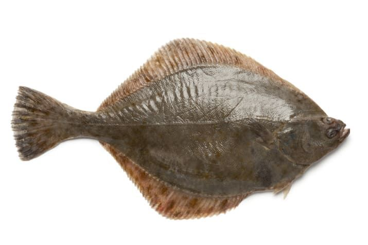 【説明できる? よく似たアレの違い】  🐟カレイとヒラメの違いは? 主に食性が異なる。 カレイは小さな虫などが主食 ヒラメは貝や甲殻類、小魚が主食 ちなみに「左ヒラメに右カレイ(目を上にして置いた時の向き)」は例外もあるそう