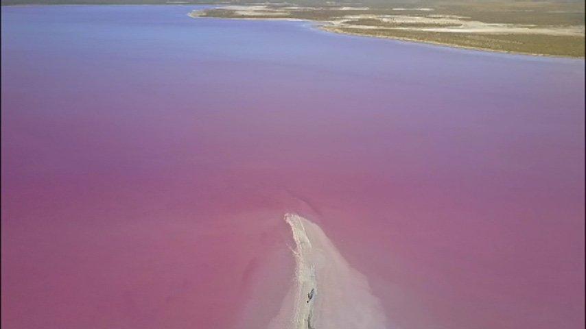南米アルゼンチンの「バルデス半島」。荒涼とした内陸部も、世界遺産に含まれています。このピンク色は湖!写真の下から突き出た白いものは<塩>で…塩の湖です。小さな甲殻類が、湖をピンクに染め上げました。