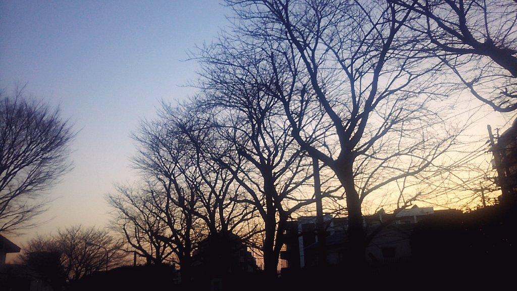 そらと木々