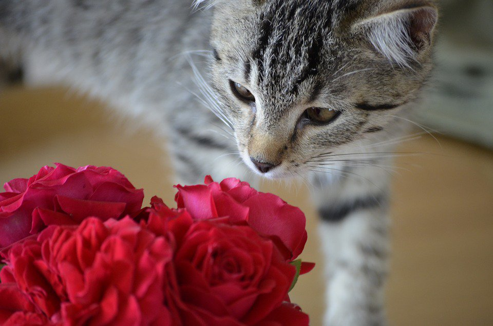 Best Valentine's Day Gifts For Your Cat