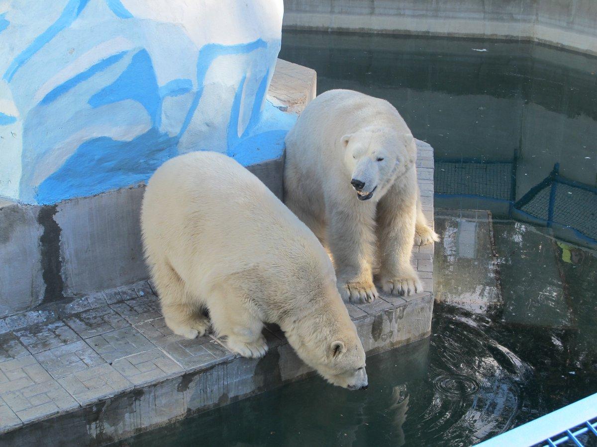 Картинки зоопарк новосибирска