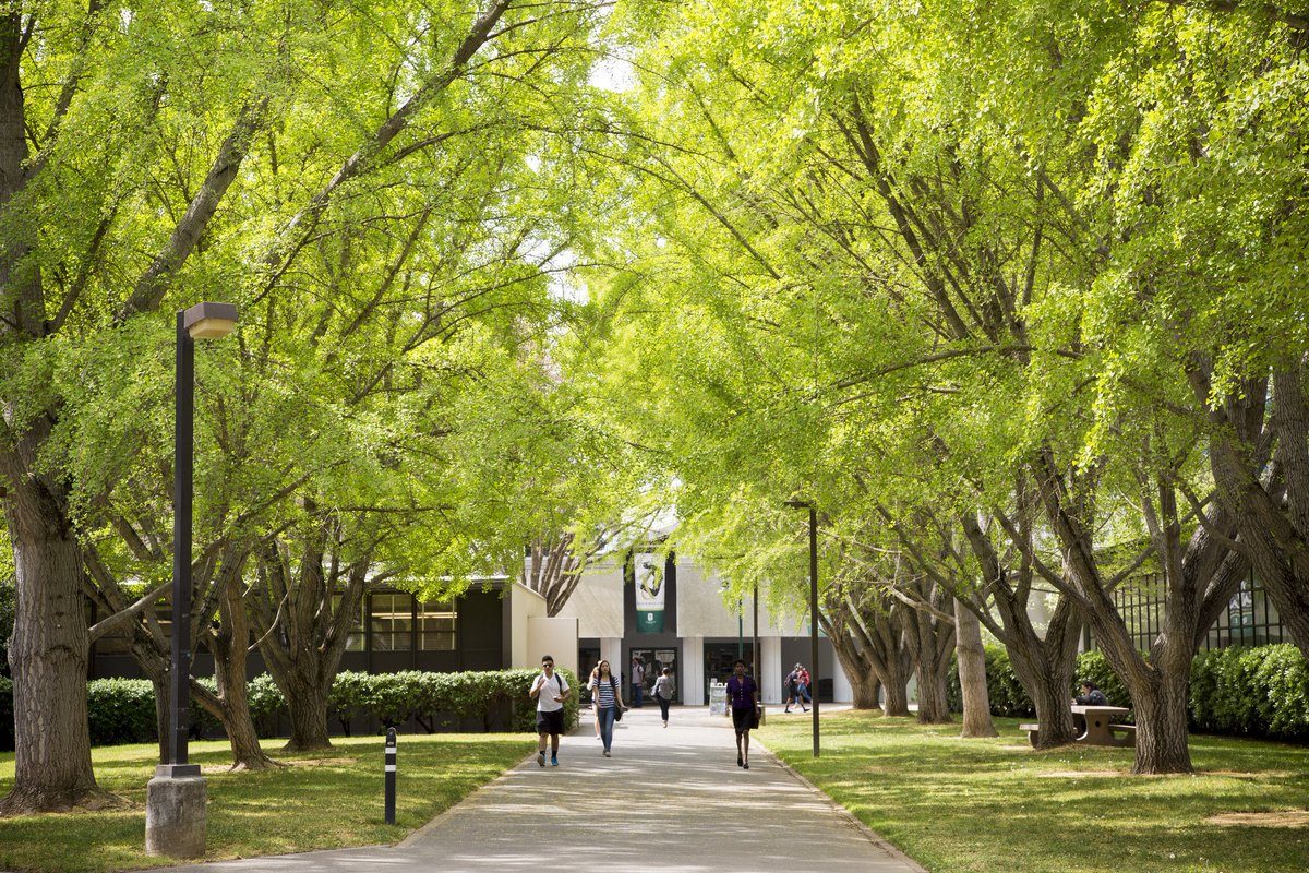 tree campus usa siu - HD1200×800