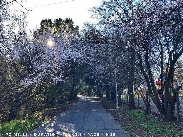 Got in a good 45 minute run this afternoon! More blossoms seen on my run today!  #sweatpink #fitfluential #werunsocial #runalways #runner #running #runnersofinstagram #runtoinspire #seenonmyrun #charitymiles #instarun #runnerscommunity #time2run #inspiri…  http:// ift.tt/2nSEAqw  &nbsp;  <br>http://pic.twitter.com/jNdxDojAcG