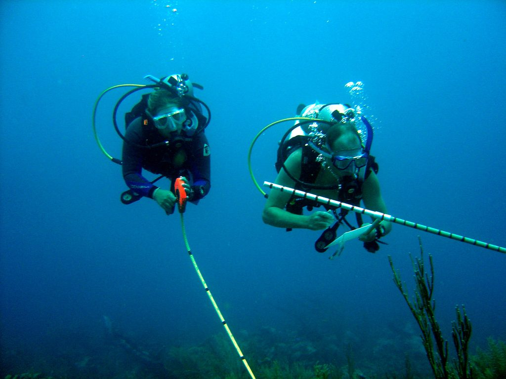 marine life seychelles and scuba diving essay Founded in 1976, the underwater centre is seychelles' oldest professional diving facility with a huge range of experience in providing diving and snorkelling facilities to visitors and residents alike.