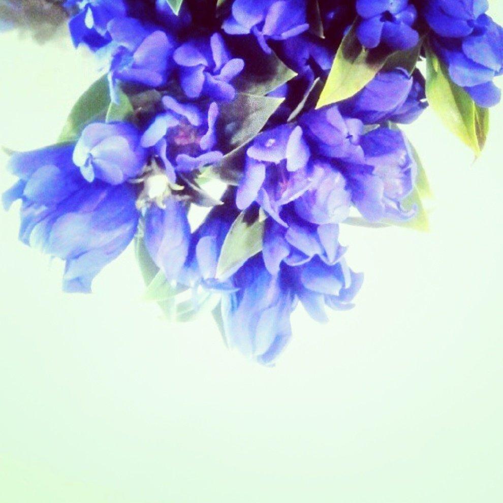 カムパネルラが窓の外を指差して言いました。 線路のへりになった芝草の中に月長石に刻まれたような 素晴らしい紫のりんどうの花が咲いていました。  宮沢賢治『銀河鉄道の夜』より