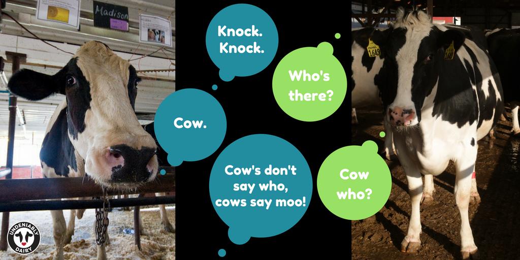 cowjokes hashtag on Twitter