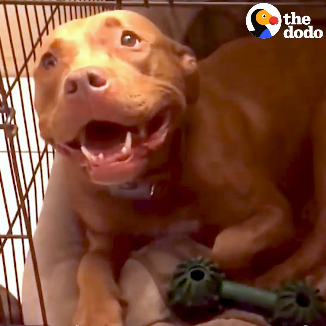 This pit bull can't go to sleep unless her dad sings her a lullaby 🎵💤💕
