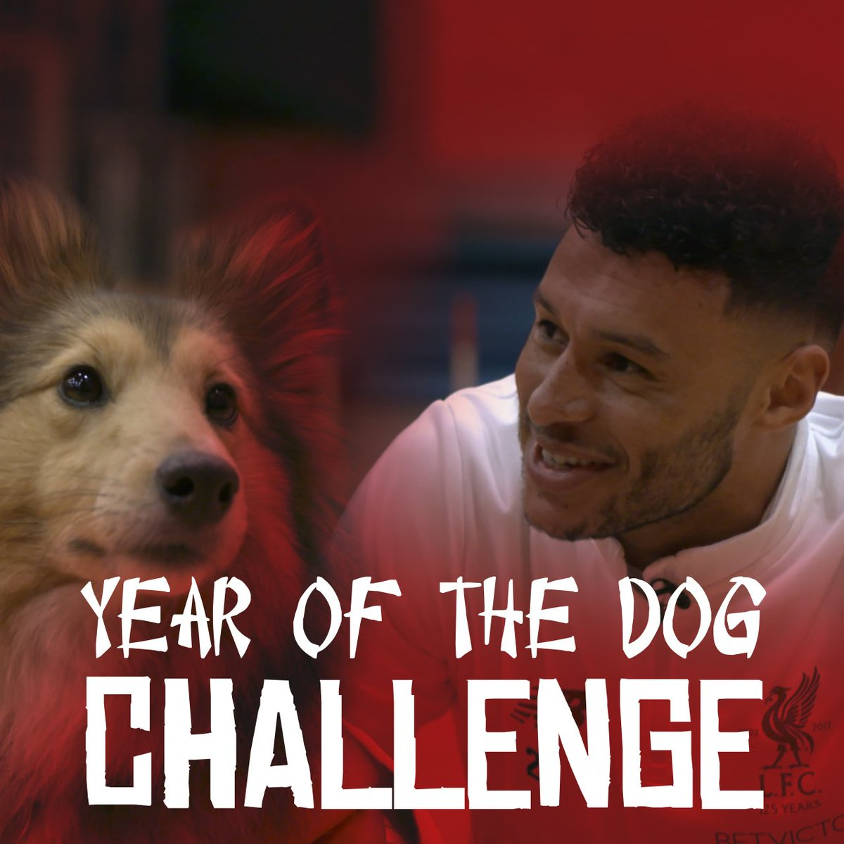 Ingsy, youre a very harsh critic! 😂  To celebrate the #YearOfTheDog, @Alex_OxChambo, @LorisKarius, @lfc18alberto and @IngsDanny took on the ultimate K9 challenge.  Full video: lfc.tv/AR8R