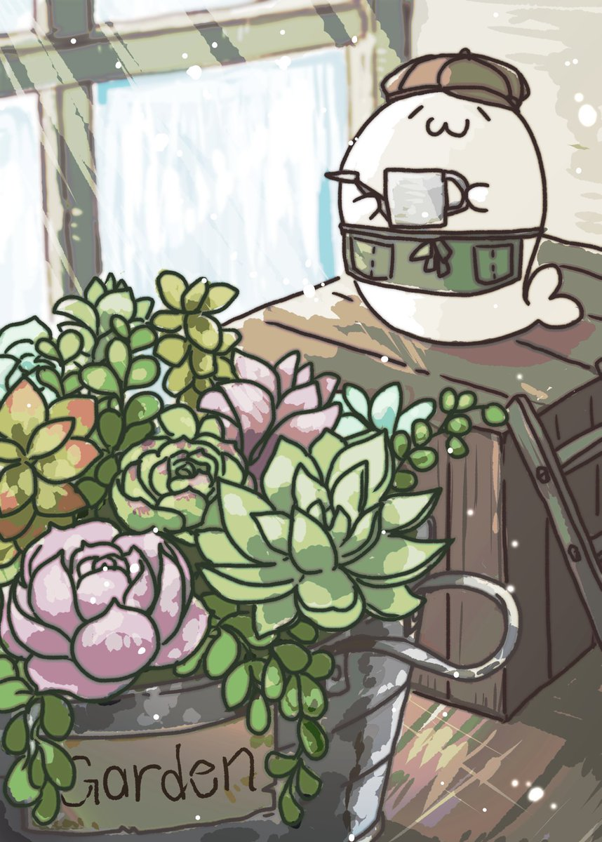 多肉植物の寄せ植えかわいいよね #あざらしさん