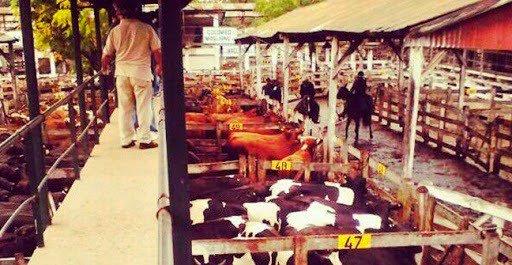Hacienda | Las cotizaciones del Mercado de Liniers del 28 / 03 / 18