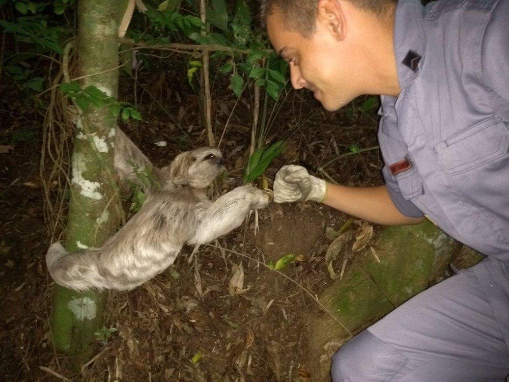 Bombeiro 'cumprimenta' preguiça após resgatar animal no litoral de SP https://t.co/h4oN6ogBoP #G1