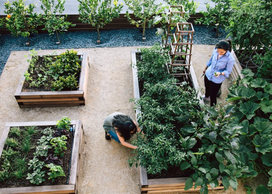 How to Grow a Chef's Garden: An award-winning L.A. restaurant gets more than a third of its produce from an unlikely place—the owners' tiny front yard.