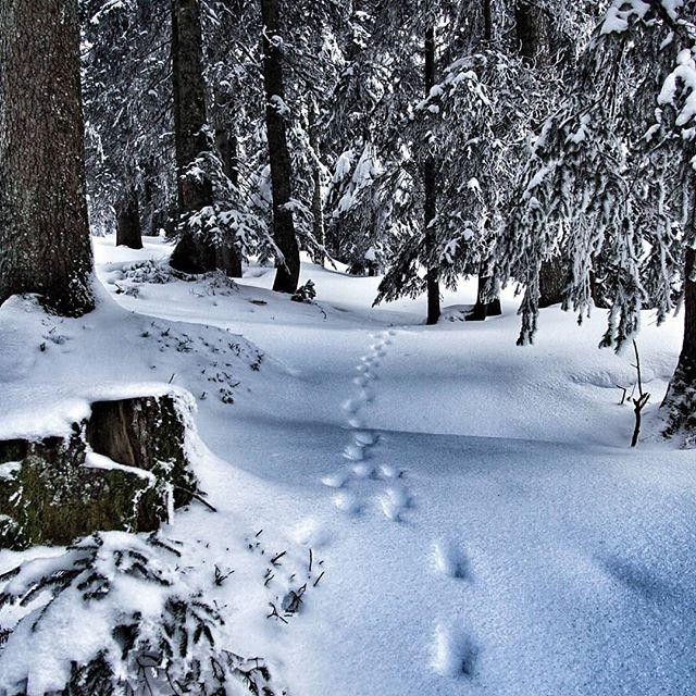 Spuren im Schnee, https://twitter.com/gizzge