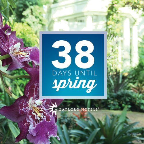 38 days until spring! Who's ready? https...