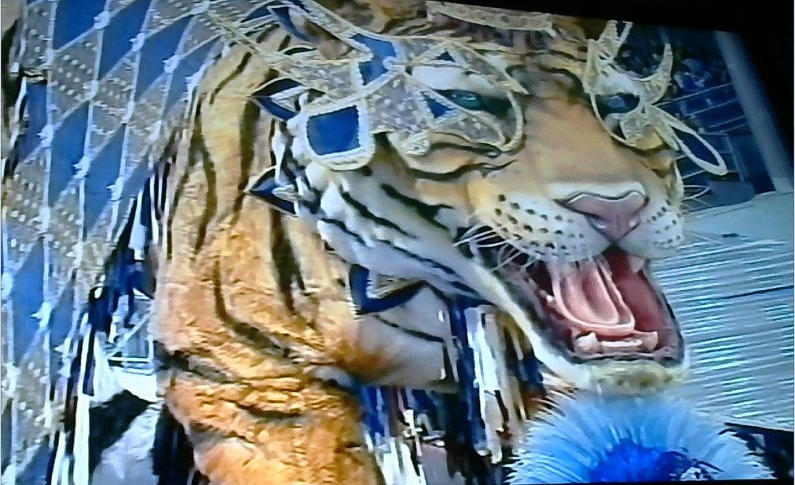 olha esse tigre da #imperiodecasaverde #...