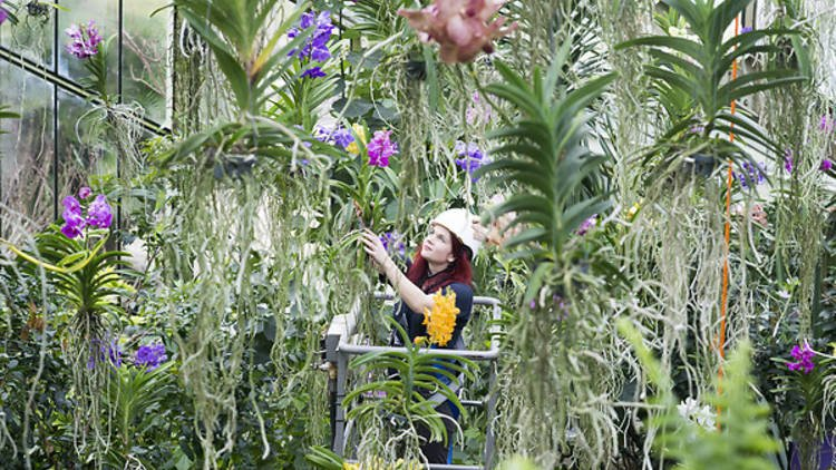 Kew Gardens celebration of the Orchid returns for its 23rd year, make sure you dont miss this tropical display before it ends in March bit.ly/2mf2qi3