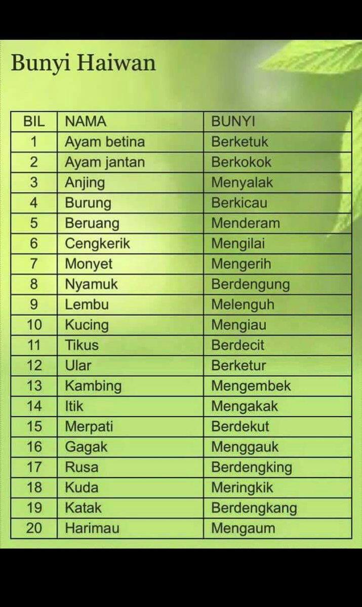Nama Kucing Melayu Jantan 81021 Nama Untuk Kucing Comel Lucu Dan Unik