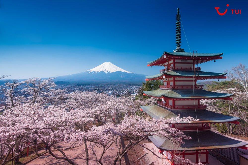 La floración de los cerezos en Japón es todo un espectáculo. Se produce a finales de marzo y lo llaman 'sakura'. ¿Nos vamos a verla?  🌸🌸🌸  http://ow.ly/Q39b30i72Tq