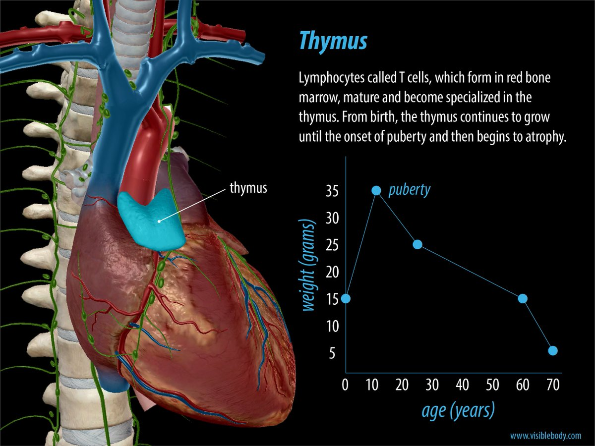 The Pacific Thymus Center Pacificthymus Twitter