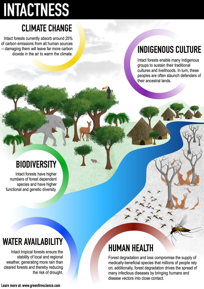 ways to slow down biodiversity loss Rapid biodiversity loss continues in absence of political action and accurate assessments dc—finding ways to the current loss of biodiversity is.