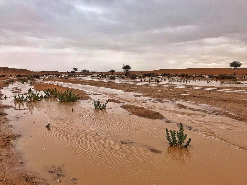 احد روافد شعيب الشوكي شرق تمير 45 كم واح...