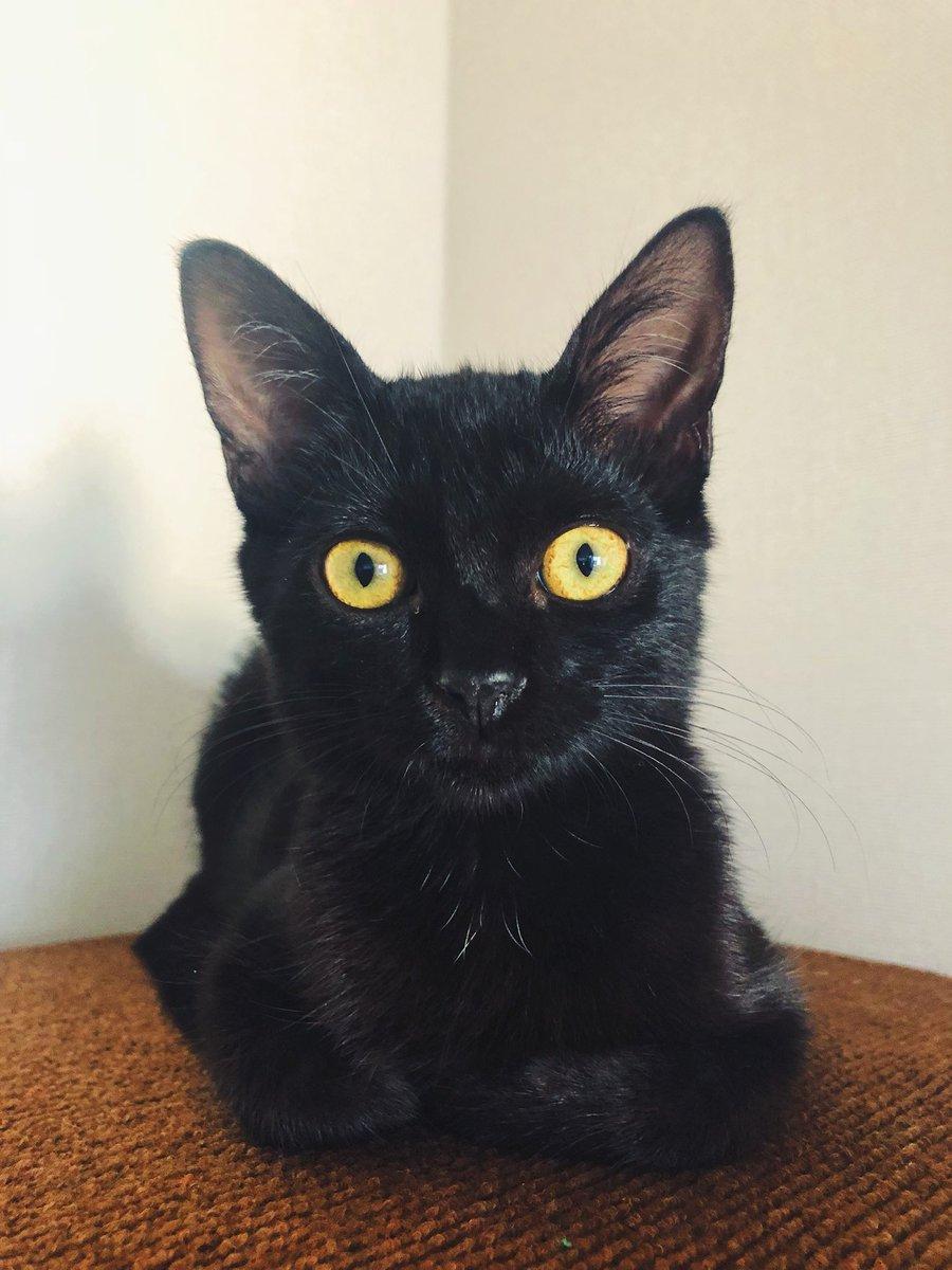 Miau 🖤🐱 https://t.co/xDVL4AfGQg