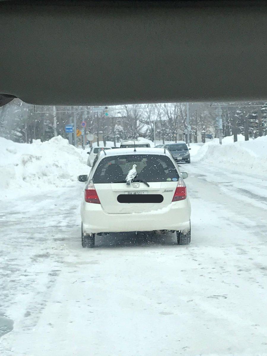 車のワイパーに片足挟んでしっかり乗ってます。一緒にドライブかな??  っていやおかしいwなんで鳩止まってるん むしろ運転手気づけやwww もうずっと乗っかってて笑った (⚠️生きてます)