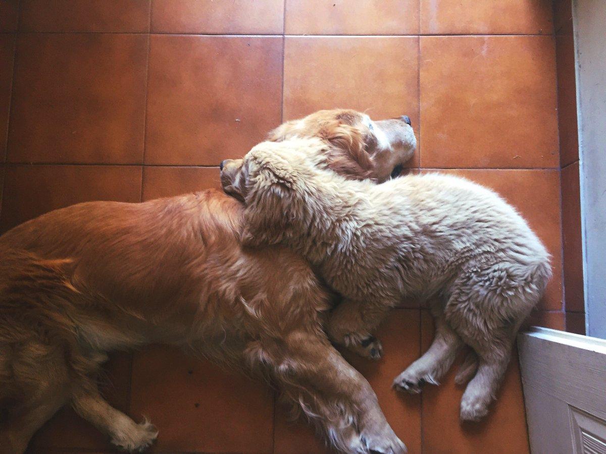 Cronicas de mi perro siendo dependiente del padre a traves de los años