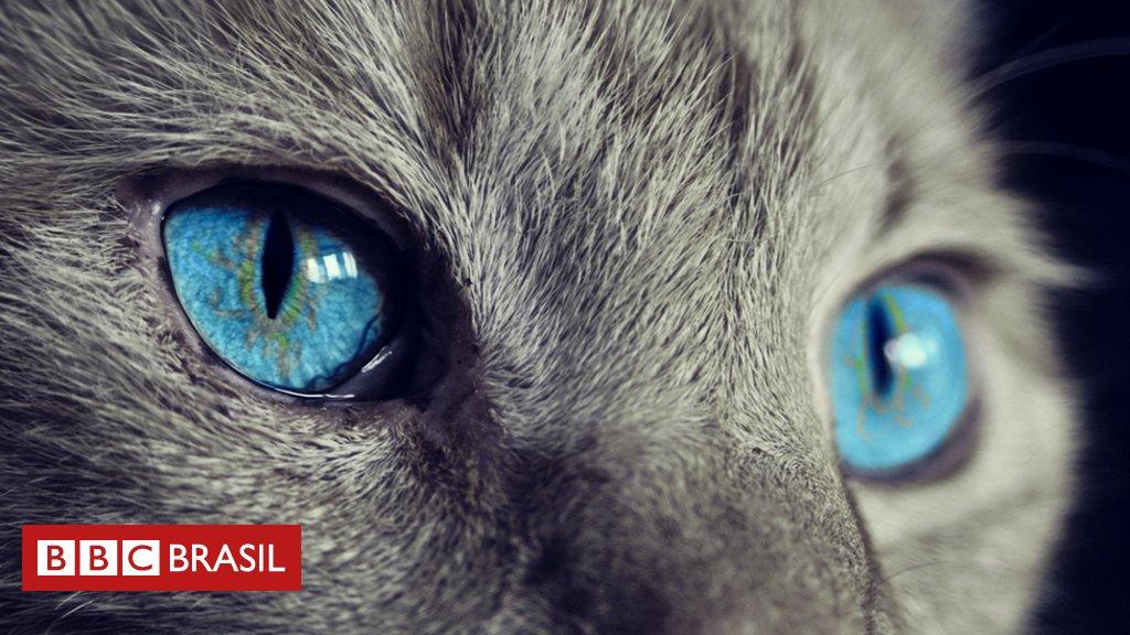 #ArquivoBBC Como a evolução transformou os gatos em animais solitários https://t.co/CnuEr45ji9