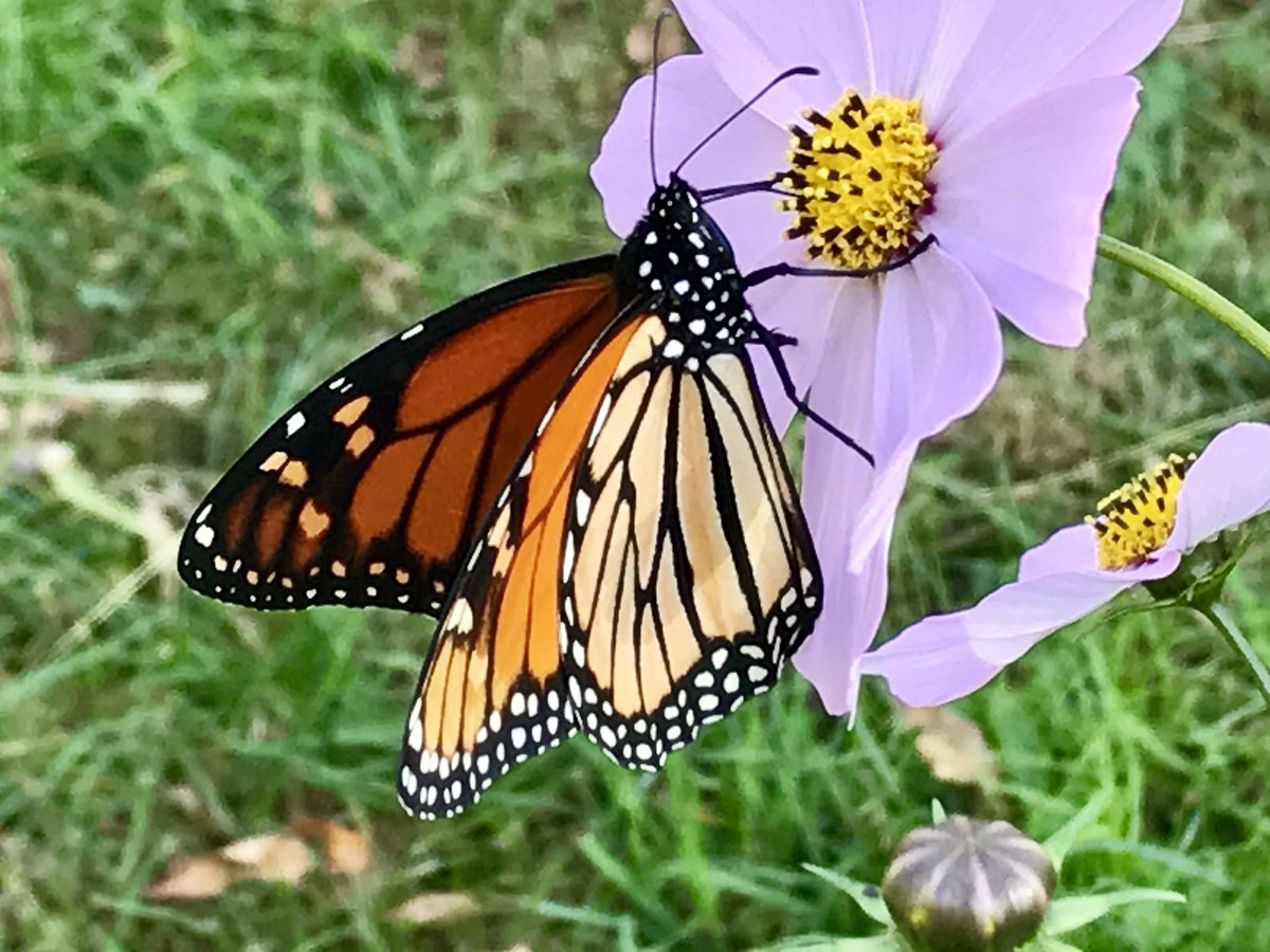 Please Tweet Your #butterfly, #hummingbird U0026 Other #pollinator #habitat  Projects At Me? Iu0027d Love To See Them! #butterflyhabitat #pollinators #bees # Garden ...