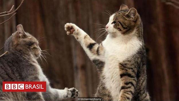 #ArquivoBBC Quão difícil pode ser domar um gato - e como a evolução explica isso? https://t.co/kMrazlUNal