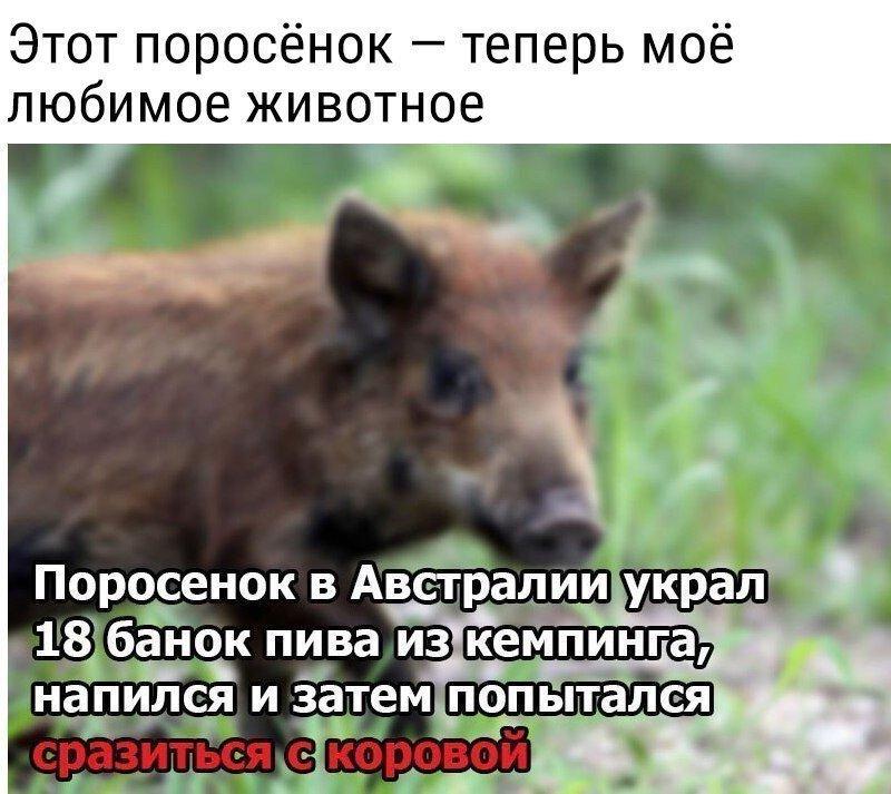 Днем, свинья смешные картинки с надписями