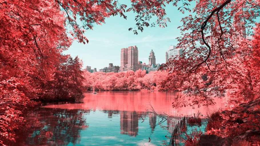 Gallery: The surreal and psychedelic art of infrared photography - https://t.co/u8NAkSYtie