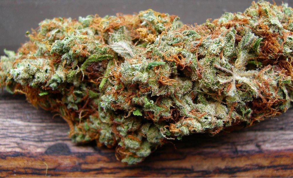Ака 47 конопли сорт легализацию петиция марихуаны за