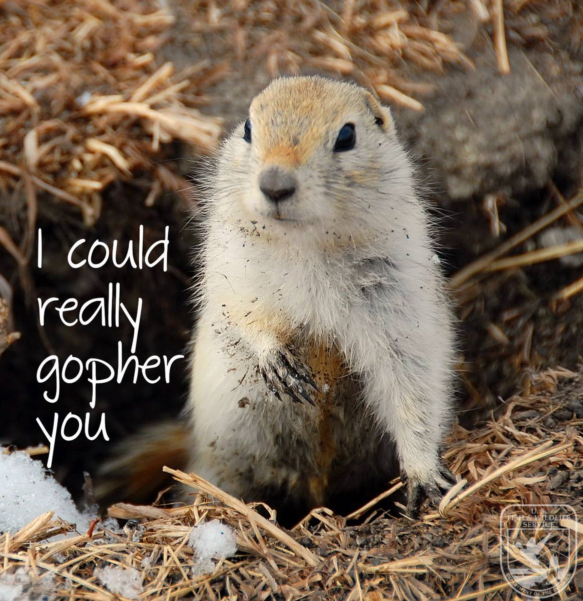 I could really gopher you!   😍Happy #Val...