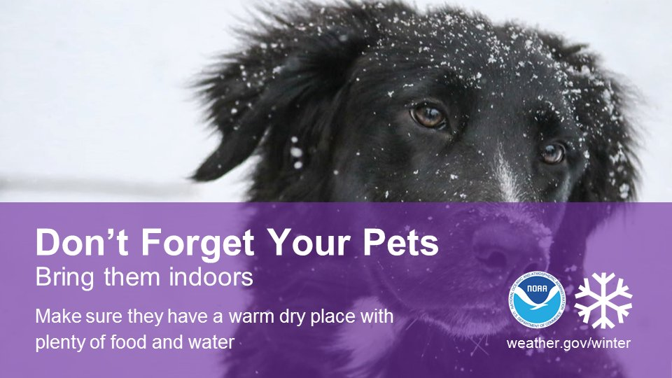 With cold temperatures on the way by early next week, don't forget about your furry friends. #cawx #cold