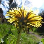 Image for the Tweet beginning: Easy ways to help pollinators