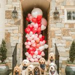 "Visit https://t.co/2n0L40LUCS to find the best party ideas! 2,575 Likes, 25 Comments - Oh Happy Day Shop (@ohhappydaypartyshop) on Instagram: ""These puppies have our hearts! ?☺️ pic by @shelbyraephotographs"""