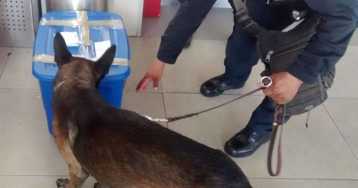 This police dog found the saddest thing hidden inside a storage container 😞