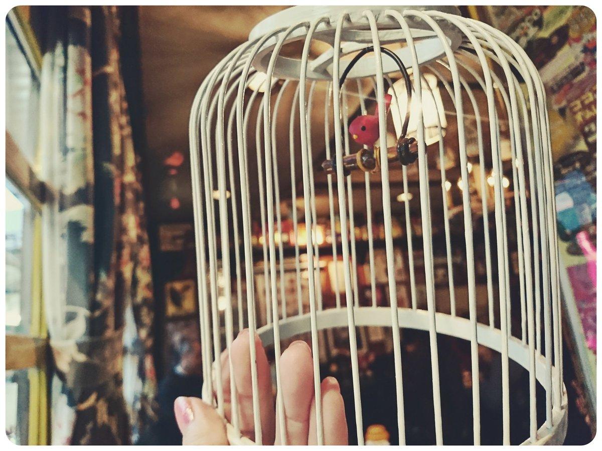 心斎橋にあるココア専門店の赤い鳥、みんな閉店するっていうツイートしかしてないけど、移転予定あっての閉店だからね…。悲しみのお通夜ツイートばっかりだけど、店員さんに確認済みだから、おいしいココア好きなみんな生きて…