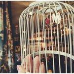 大阪にある珍しいココア専門店の「赤い鳥」が今月閉店?悲しみの声が広がる