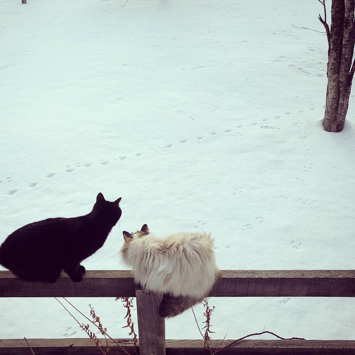 ふかふかの雪が積もりました。 お庭を一直線に横切るキツネさんの足あとと、駆け回ったらしいリスさんの足あとが残っていました。