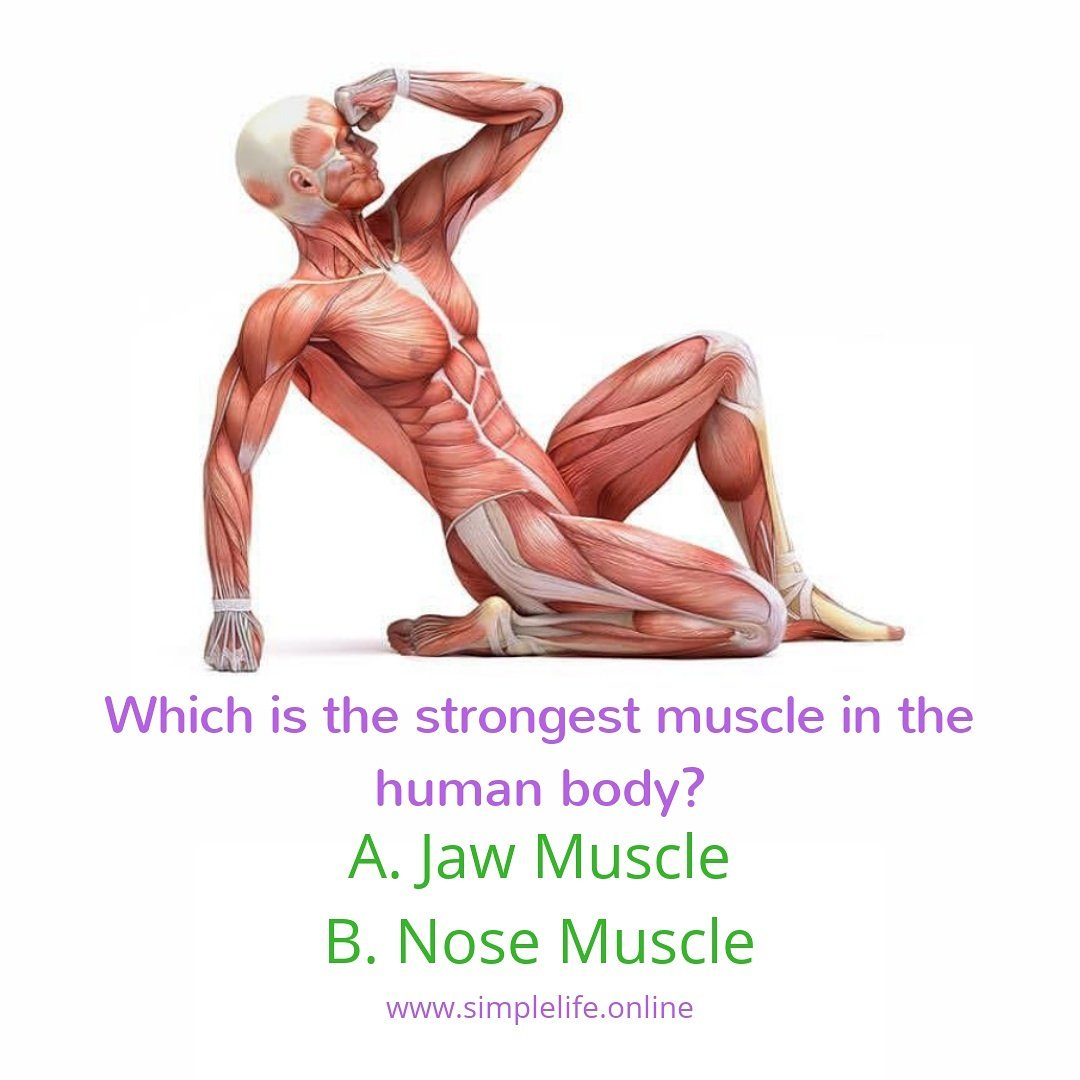 In the what body is muscle strongest What Is