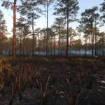 #USFWS firefighters plan to conduct a 300 acre prescribed fire today at Okefenokee NWR #GAfire #rxfire #GoodFires 🔥