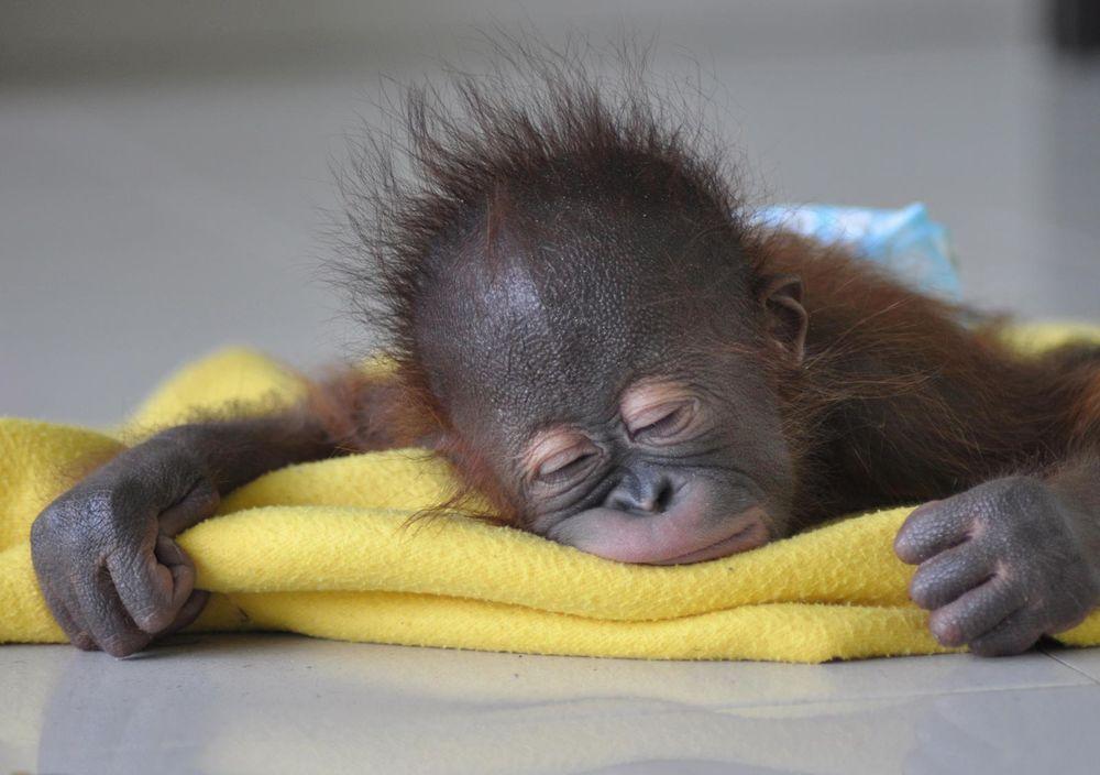 Прикольная картинка спящего