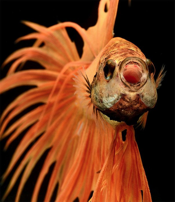 Powerful Fish Portraits by Visarute Angkatavanich